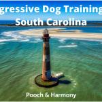 Aggressive Dog Training in South Carolina