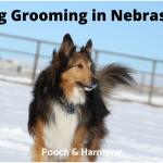 Dog Grooming in Nebraska