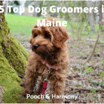 dog groomers in maine