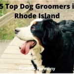 dog groomers in rhode island