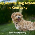 mobile dog groomers in kentucky