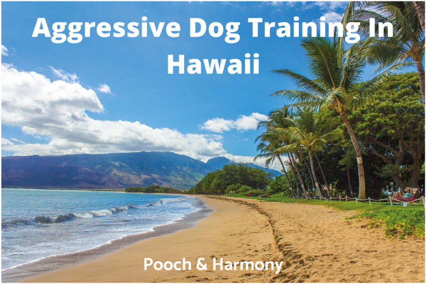 Aggressive Dog Training In Hawaii