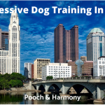 Aggressive Dog Training In Ohio