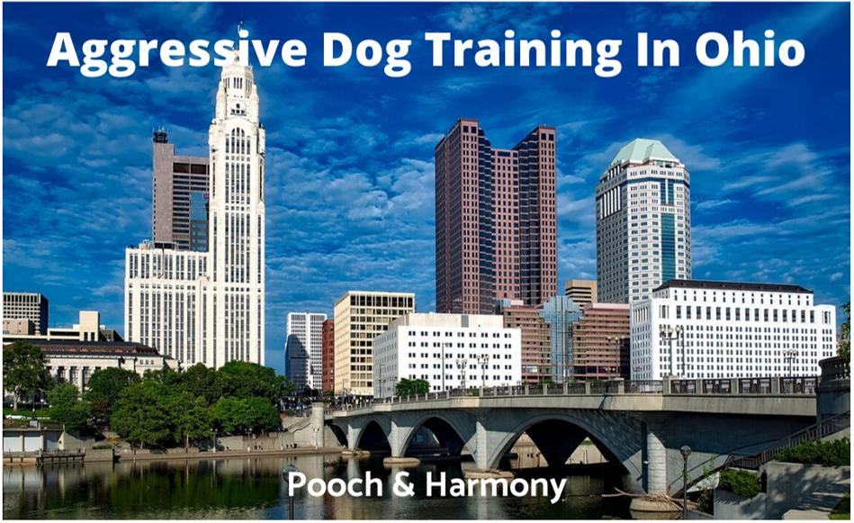 Aggressive Dog Training In Ohio