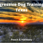 Aggressive Dog Training In Texas