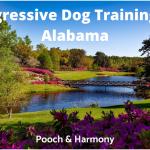 Aggressive Dog Training in Alabama