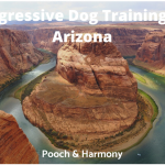 Aggressive Dog Training in Arizona