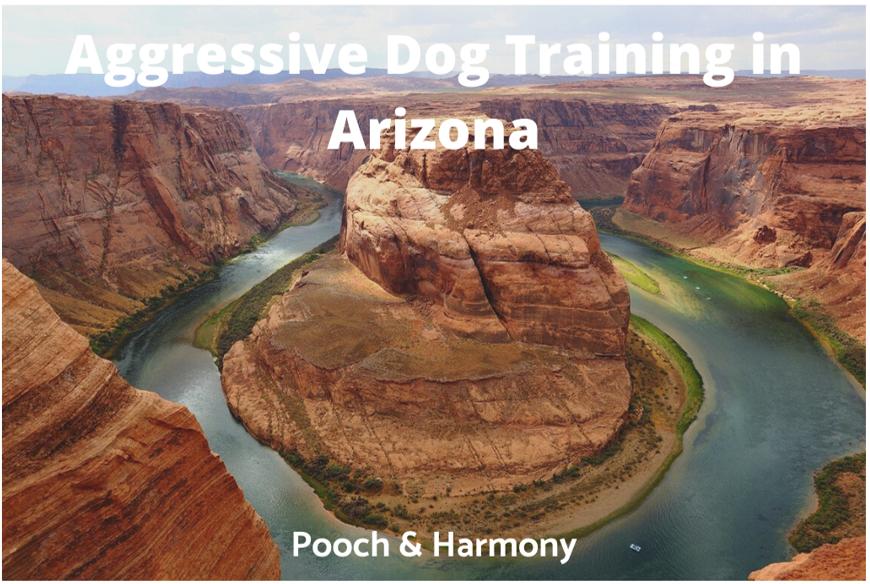 Aggressive Dog Training in Arizona