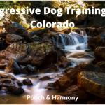 Aggressive Dog Training in Colorado