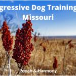 Aggressive Dog Training in Missouri