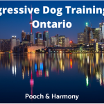 Aggressive Dog Training in Ontario