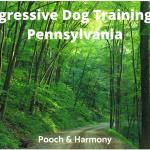 Aggressive Dog Training in Pennsylvania