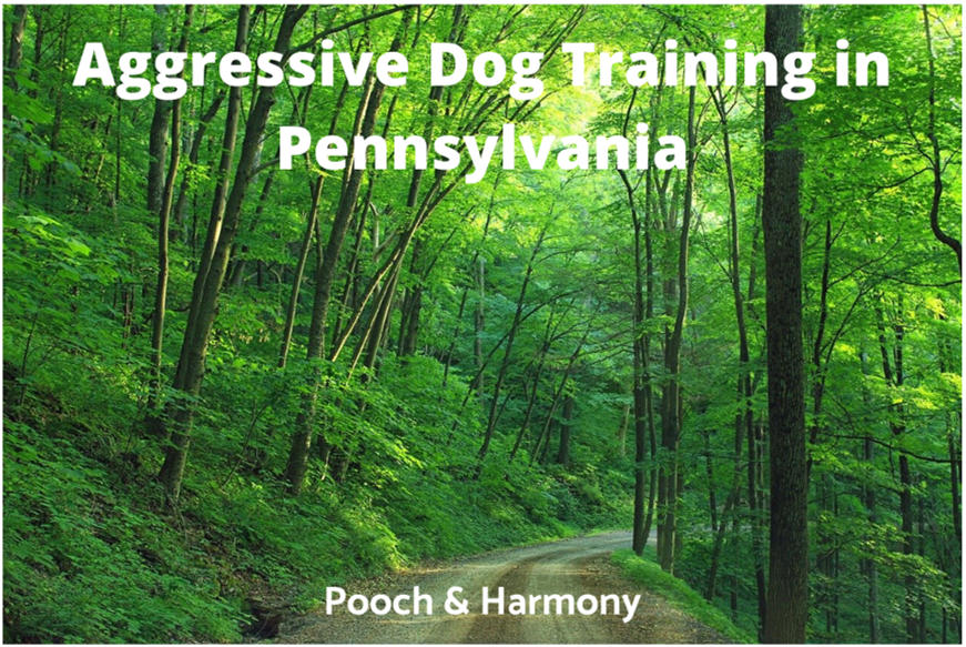 Aggressive Dog Training in Pennsylvania