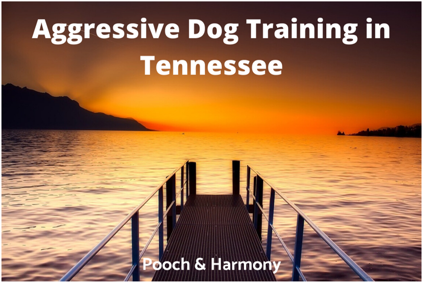 Aggressive Dog Training in Tennessee