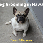 Dog Grooming in Hawaii
