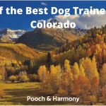 best dog trainers in colorado