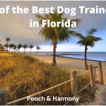 best dog trainers in florida