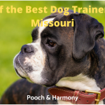 best dog trainers in missouri