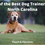 best dog trainers in north carolina
