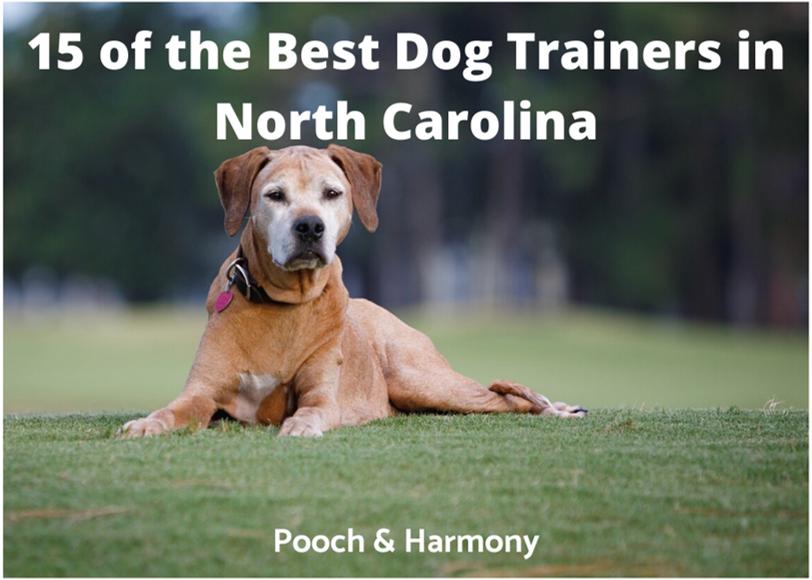 best dog trainers in north carolina