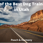 best dog trainers in utah