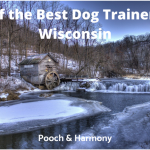 best dog trainers in wisconsin