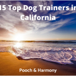 top dog trainers in california