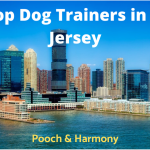 top dog trainers in new jersey