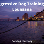 Aggressive Dog Training in Louisiana