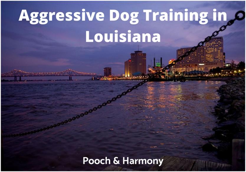 Aggressive Dog Training in Louisiana