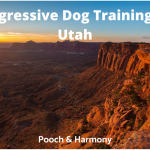 Aggressive Dog Training in Utah
