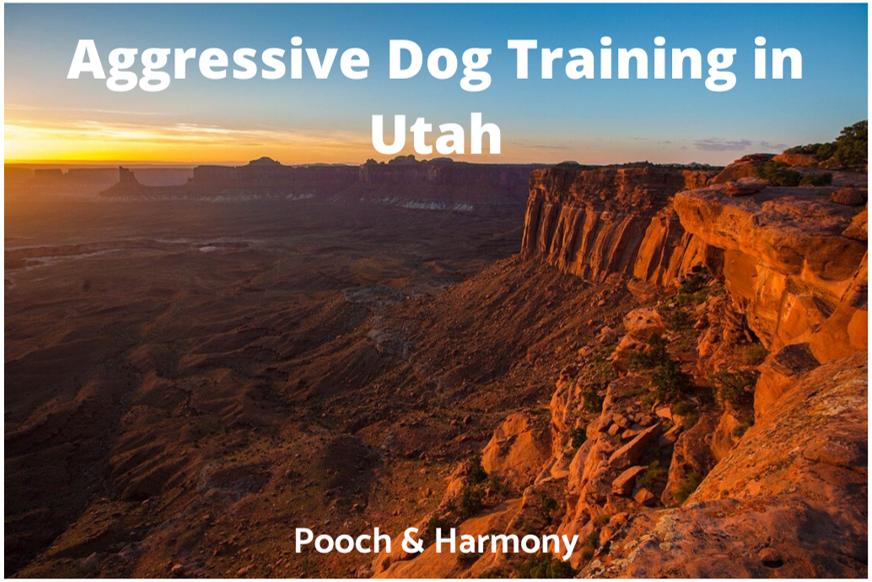 Aggressive Dog Training in Utah