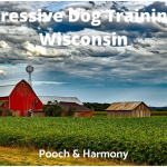 Aggressive Dog Training in Wisconsin