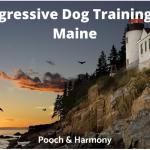 aggressive dog training in Maine