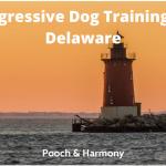 aggressive dog training in Delaware
