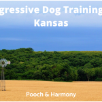 aggressive dog training in kansas