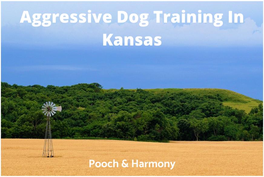 aggressive dog training in kansas