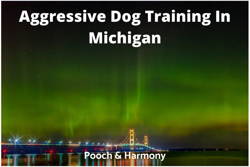 aggressive dog training in michigan