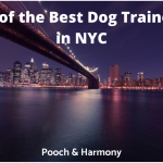 best dog trainers in NYC
