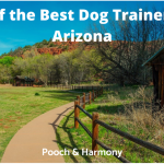 best dog trainers in arizona