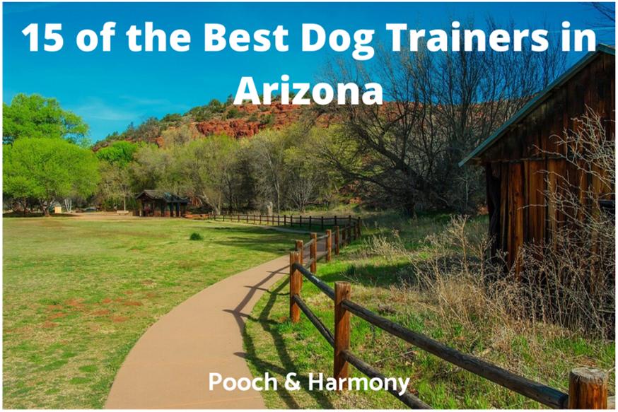 best dog trainers in arizona