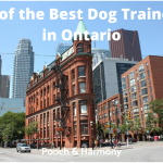 best dog trainers in ontario