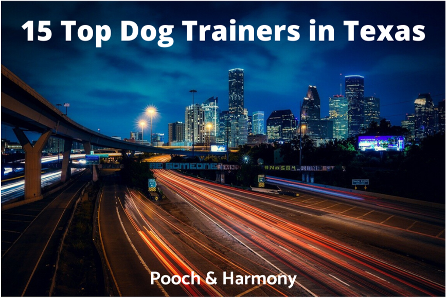 top dog trainers in texas