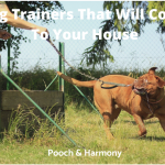 Dog Trainers That Will Come To Your House