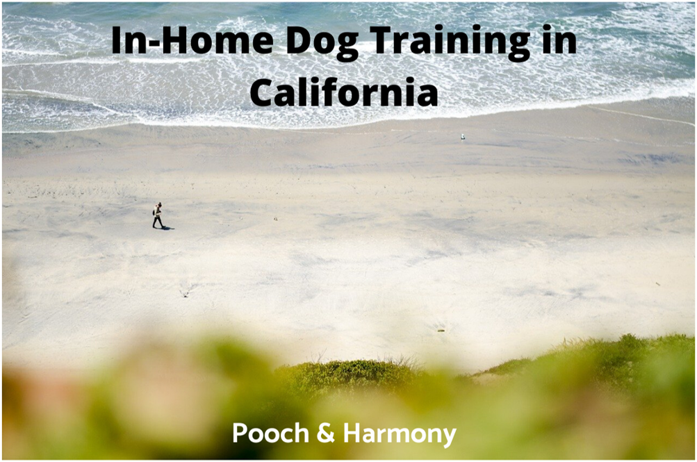 In-Home Dog Training in California