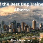 best dog trainers in alberta