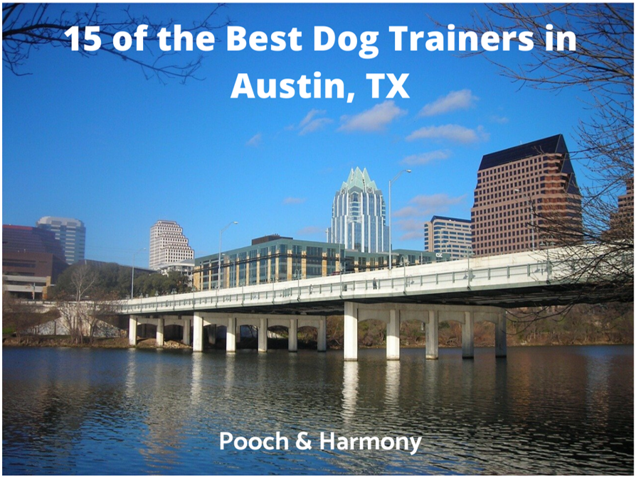 best dog trainers in austin, tx