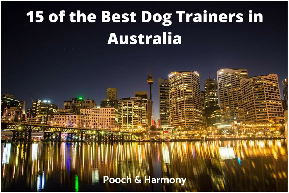 best dog trainers in australia