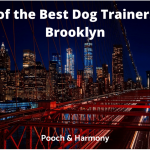 best dog trainers in brooklyn
