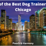 est dog trainers in chicago